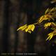 Adam the Tree October ft. Kasandra J.