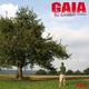 DJ Gambit (Versbox) Gaia