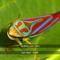 San Riser by Dedrich Von Dorn mp3 downloads