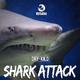 Dry & Kiilo Shark Attack