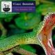 Klaus Benedek The Snake Ep