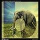 Max Marotto & Tommy Boccuto Elephant