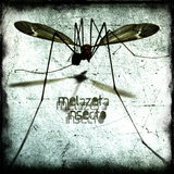 Insecto by Melazeta mp3 download