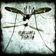 Melazeta Insecto
