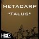 Metacarp Talus