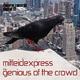 Mitleidexpress The Genius of the Crowd