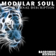 Modular Soul - Internal Discription