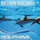 Nathon Visconti Dolphins