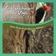 Nature Healing Acoustics Relaxation Meditation Frühjahrskonzert der Vögel im Walde 2012