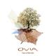 Ovia Days of Wonder