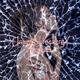 Universallifeenergy - Fracture