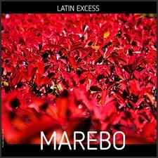 Latin Excess