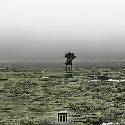 markus-wormstorm-figue-in-field