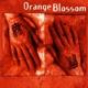 orange blossom orange blossom