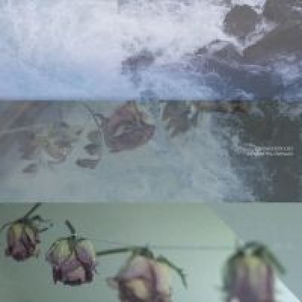 Cremation Lily - In England Now, Underwater