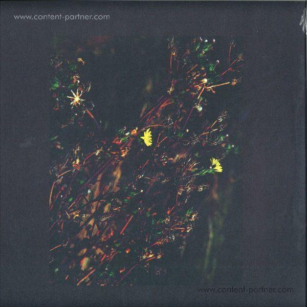 Dark Sky - The Passenger / The Walker (Roman Flügel Remix)