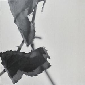 Kara-Lis Coverdale - Grafts (Expanded Reissue)