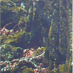 """S Olbricht - For Perfect Beings (LP + 10"""")"""