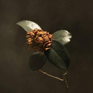 St.Paul & The Broken Bones - Young Sick Camellia (LP)