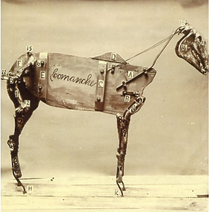 stokes,chadwick - the horse comanche
