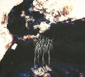 Bosque - Beyond